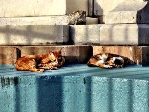 Street Cats of Old San Juan
