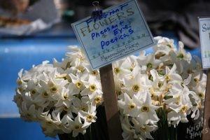 Portland Farmers Market: Pheasant Eye Poeticas