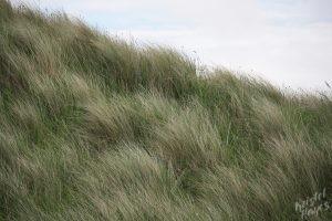 Dunnet Bay Sand Dunes