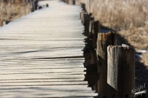 Fore River Sanctuary: Bridge across wetlands