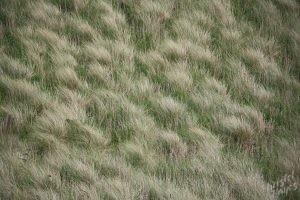 Grassy Dunes at Dunnet Bay