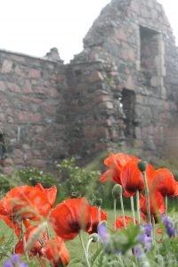 Iona Nunnery: Poppies