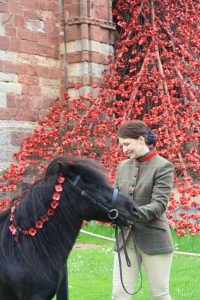 Pony in front of Poppies at St. Magnus Cathedral