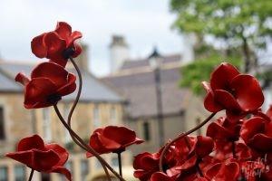 Poppies at St. Magnus