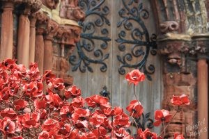 Poppies at St. Magnus Cathedral Entrance, Kirkwall, Orkni Island, Scotland