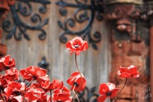 Poppies at the Entrance of St. Magnus