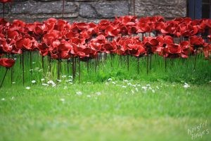 Poppies on the Grass at St. Magnus