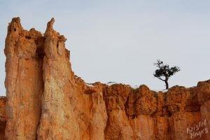Bryce Canyon Red Rocks