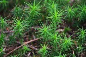 Bright Green Lichen in the Forest