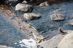 Curious Bird at Long Lake Dam