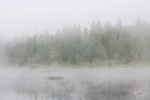 Misty Morning Allagash