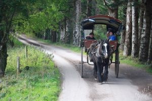 Jaunting Car-Killarney National Park, Ireland