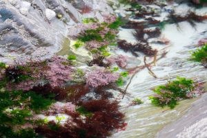 Tide Pools Near Derrynane House-Ring of Kerry, Ireland