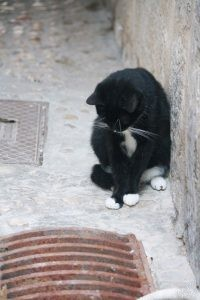 Cat Watching the Drain, Dubrovnik Croatia