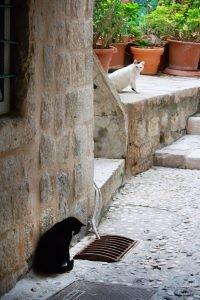 Cats, Dubrovnik Croatia