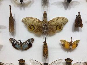 Dubrovnik Museum of Natural History, Strange Winged Creatures