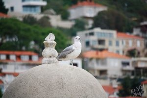 Seagull Watching the Dubrovnik Harbor