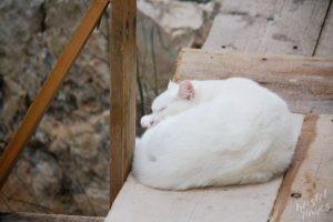 White Cat Sleeping, Dubrovnik Croatia
