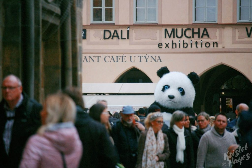 Giant Panda in Old Town Square