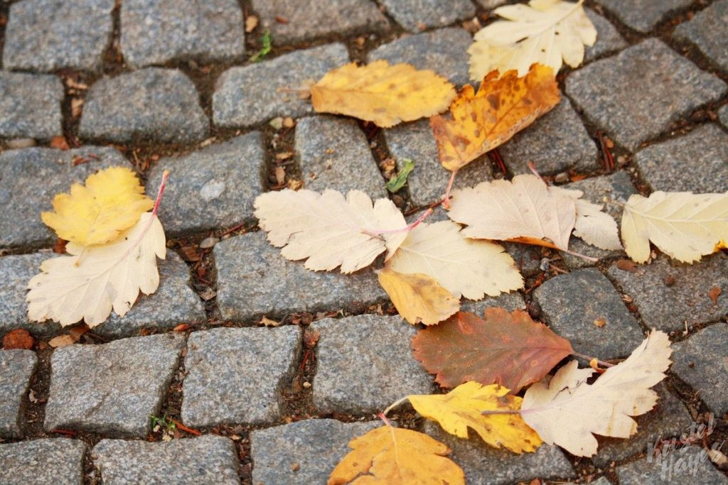Falling leaves on the cobblestone streets around Prague Castle